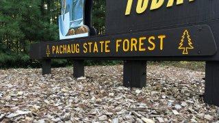 Pachaug State Forest