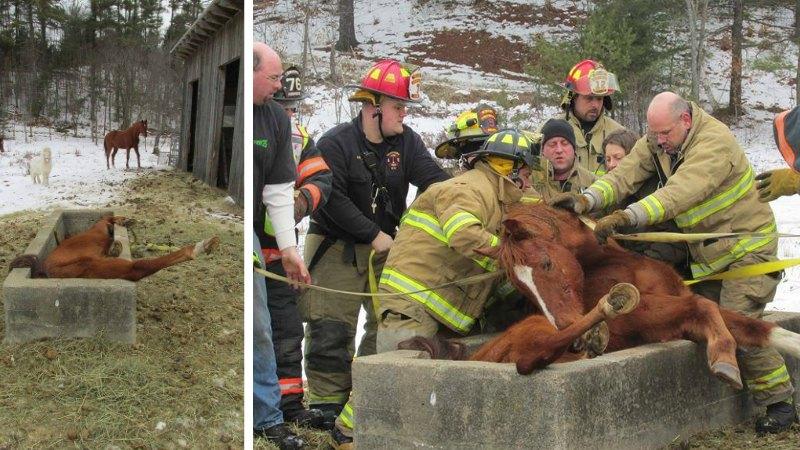 TLMD-Goshan-rescatan-caballo