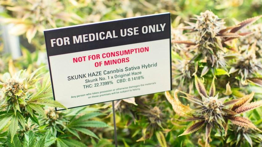 TLMD-marihuana-medicinal-cultivo-shutterstock_248416231