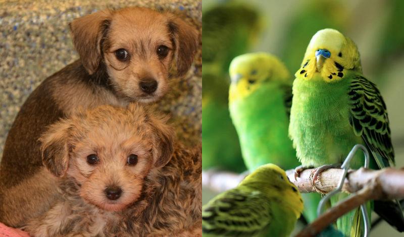 animales-rescatados-lawrence