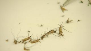 mosquito-generic