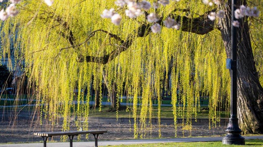 A file photo showing Boston Public Garden