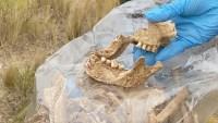 Macabro hallazgo en Bolivia: esqueletos humanos en seis tumbas clandestinas