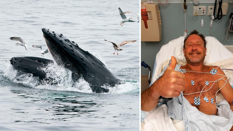 """""""Trató de comerme"""": buzo sobrevive luego de que ballena lo atrapara con su boca"""