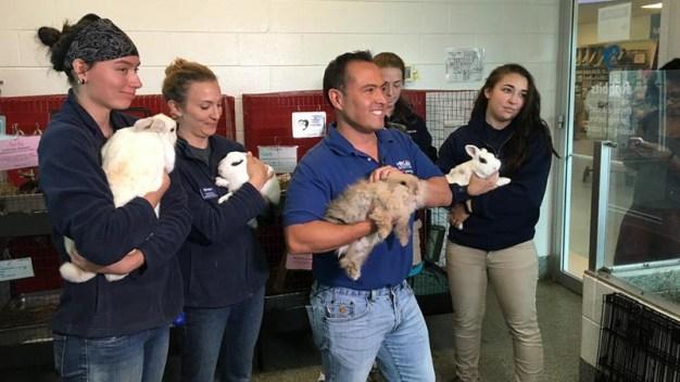 Desocupar los Albergues: Mascotas encuentran nuevos hogares